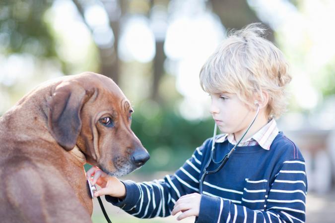 Boy using stethoscope on pet dog