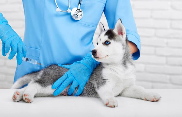 Administering Canine 6way Single Dose Puppy Vaccine | LoveToKnow