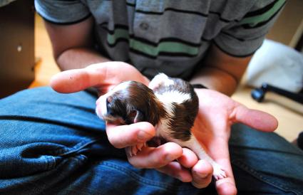 Man Holding Newborn Puppy