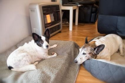 Dogs sleeping in front of heater