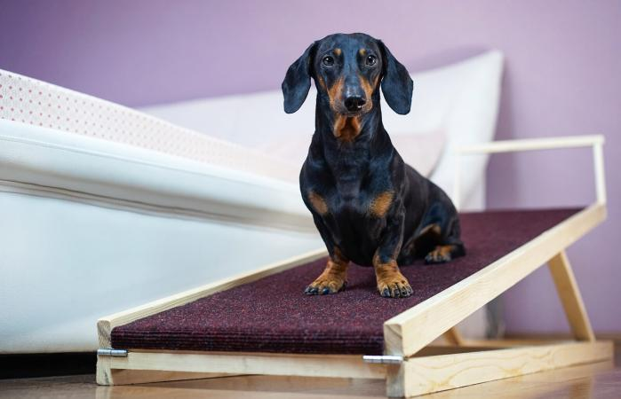 Dog sits on a home ramp