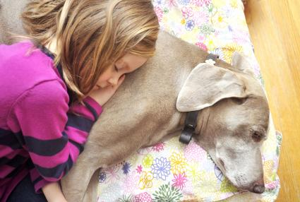 Girl resting her head on her pet Weimaraner dog