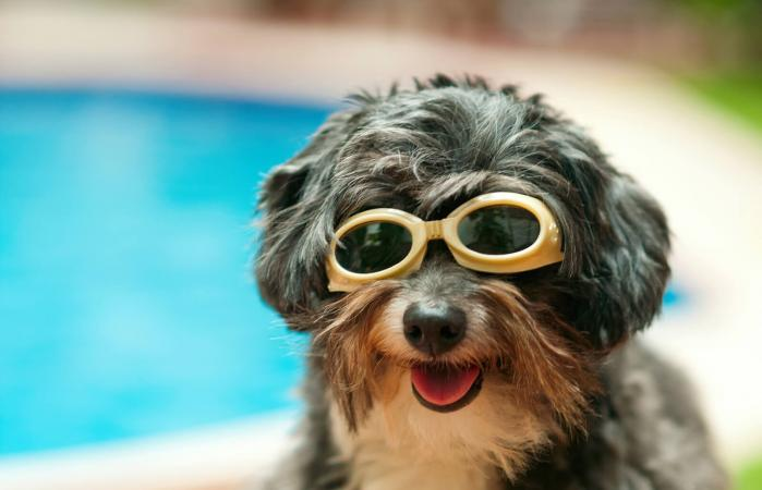 Happy dog with sunglasses on