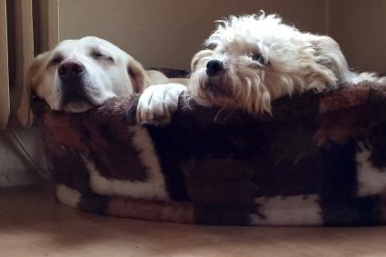 Dogs Relaxing In Pet Bed At Home