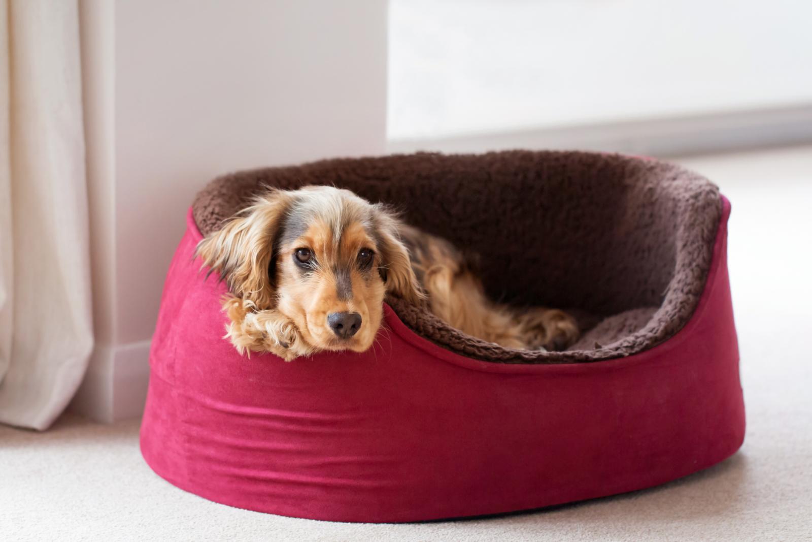 Pet Cat Dog Winter Cushion Beds Round Warm Mats Nests Ears Shape House Beds Cat Supplies