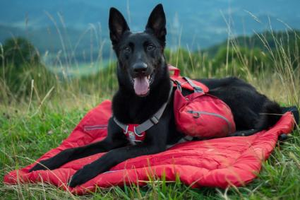 Kurgo Waterproof Travel Dog Bed