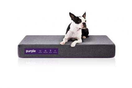 The Purple Pet Bed