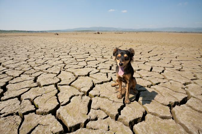 thirsty dog in desert