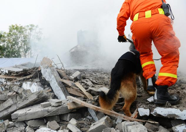 Rescue dog searching building wreckage