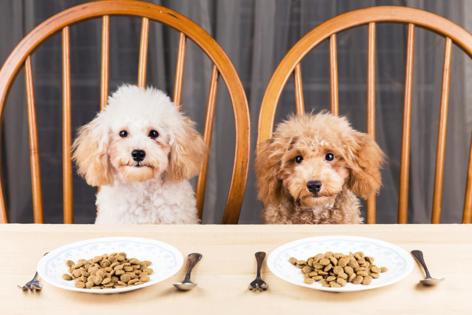 Portrait Of Dogs With Pet Food At Table
