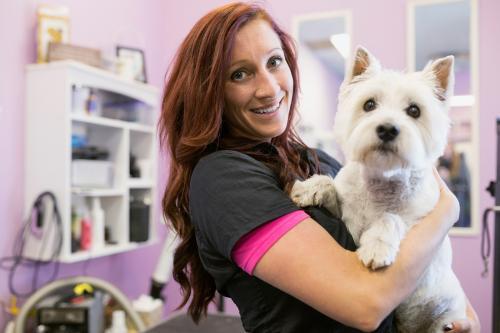 Dog groomer holding West Highland Terrier
