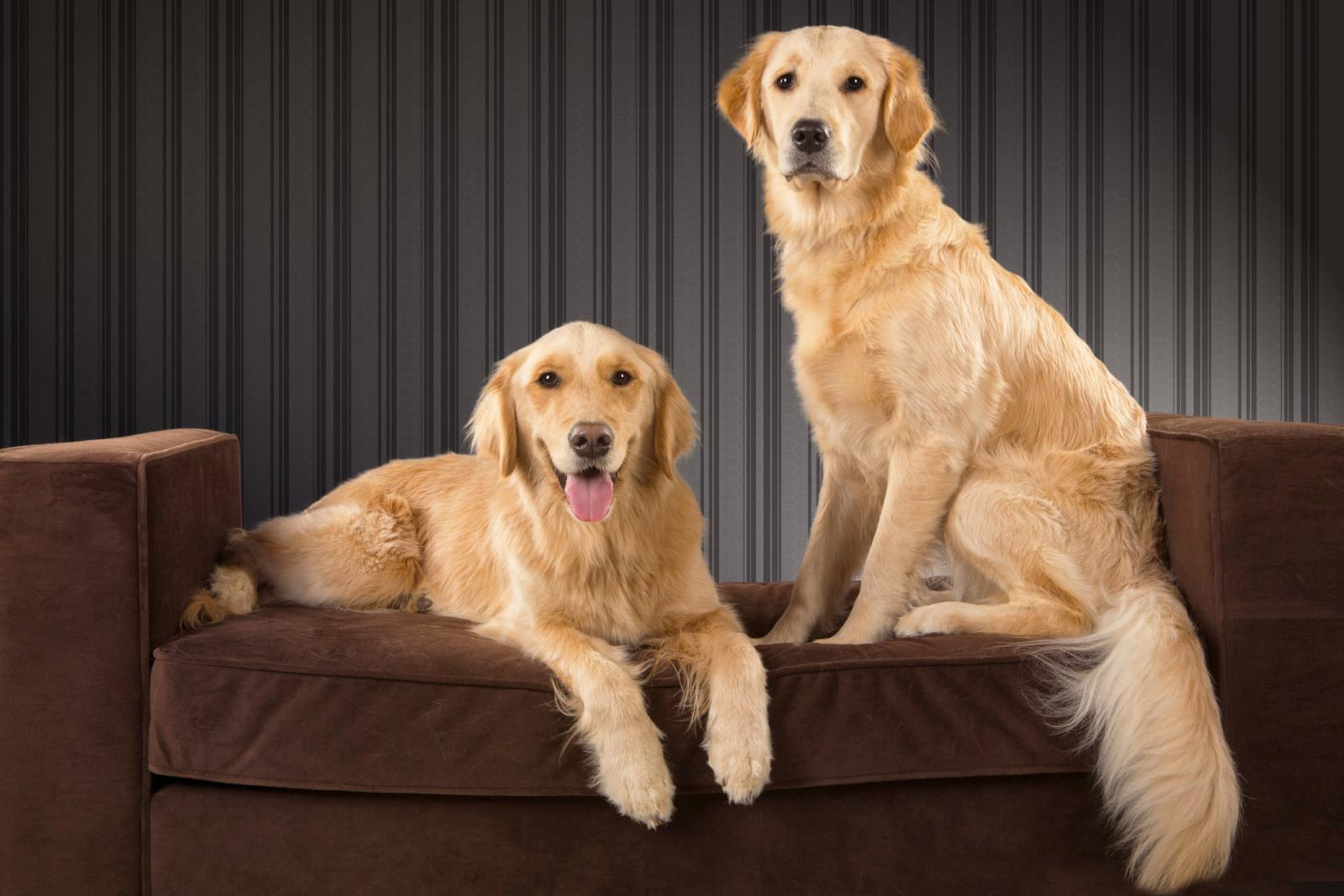 Signs a Dog Has Been Mating | LoveToKnow
