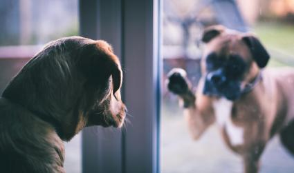 Two dogs separated by glass door