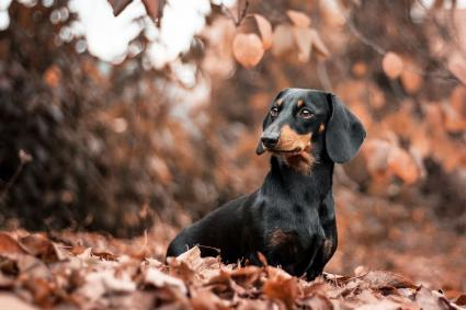 Dog During Autumn