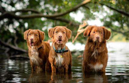 The Water Gang
