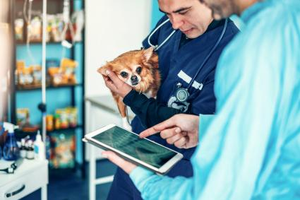 Two experienced veterinarians examining an x-ray image