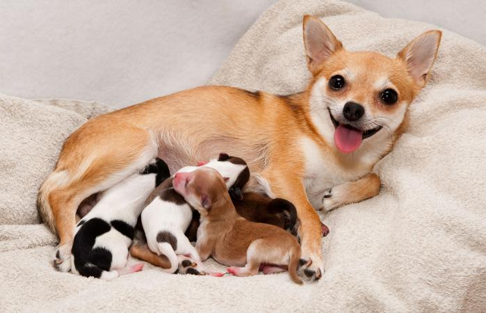 Dog with her litter