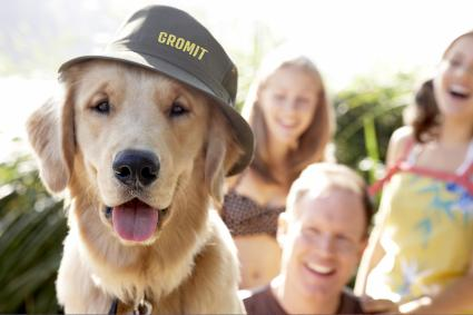 Golden Labrador wearing hat with name on it