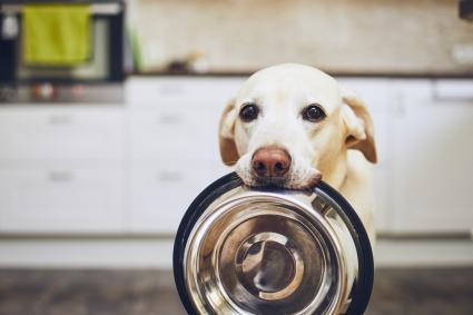 Dog with bowl in mouth