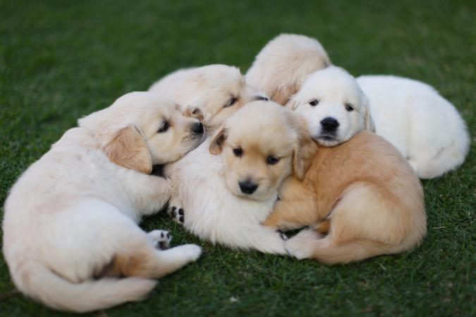 How to Sell Puppies | LoveToKnow