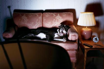 Dog on Sofa Watches TV