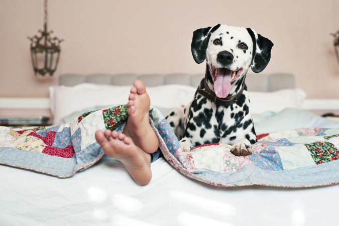 Girls feet peeking out and Dalmatian dog
