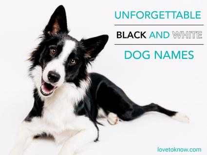 Unforgettable black and white dog names