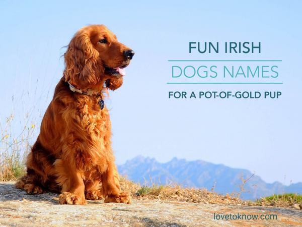 Fun Irish dogs names