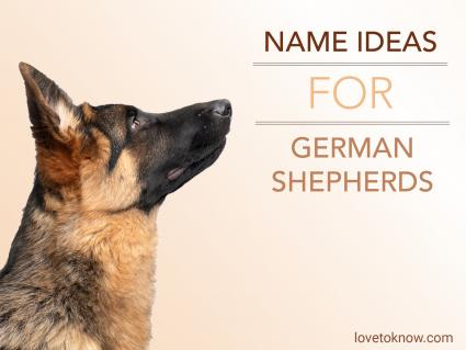 Name ideas for a german shepherd dog
