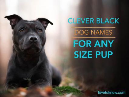 Clever black dog names