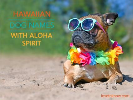 Dog names with aloha spirit