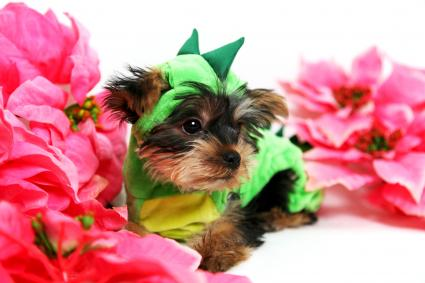 Dog dressed as a baby dragon