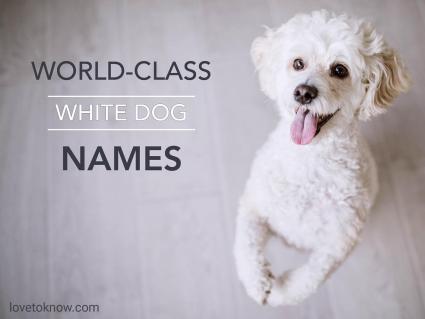 World-Class White Dog Names