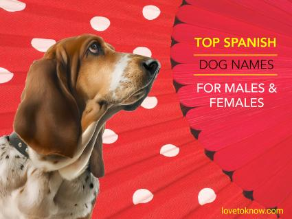 Top Spanish dog names for males and females
