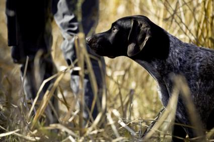 Hunter with German Shorthaired Pointer
