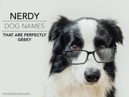Funny studio portrait of smiling puppy dog border collie in eyeglasses
