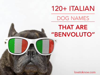 Italian Dog Names That Are Benvoluto
