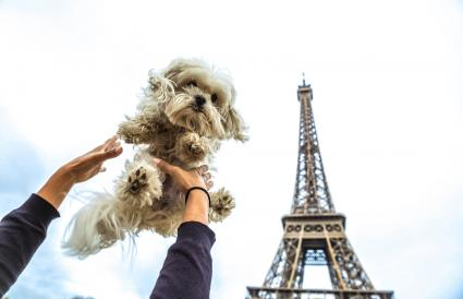 person holding a dog in Paris