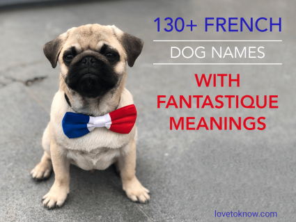 French Dog Names With Fantastique Meanings