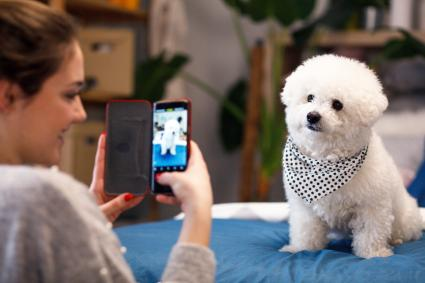 Young girl taking photo of her dog bichon frise with mobile phone at home