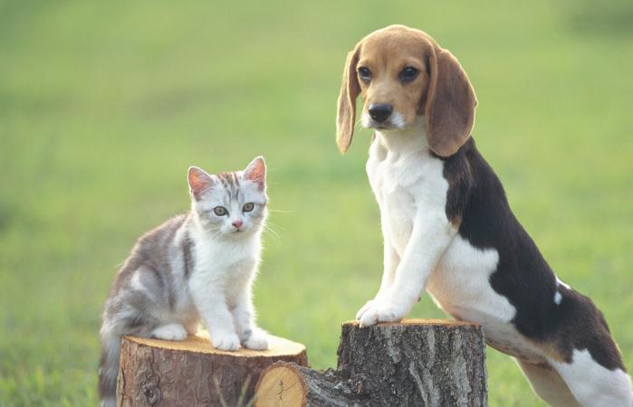 Dog and a Cat Standing