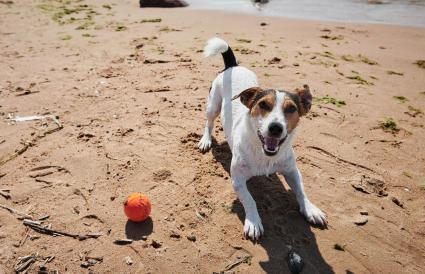 dog play with orange ball