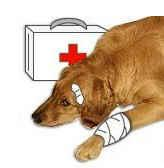 Injured dog with first aid kit