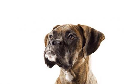 Sudden Dog Personality Change Lovetoknow