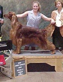 Lindsey Kuhn, Dog Show Handler with Irish Setter