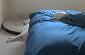 Owner on the bed, dog on the floor
