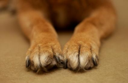 Closeup of a dog's paws