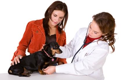 Dog being examined by vet