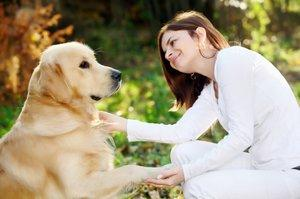Golden with owner