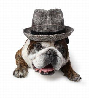 111 Terrific Male Dog Names to Consider | LoveToKnow